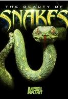 Discovery: Красота змей