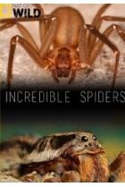 Удивительные пауки